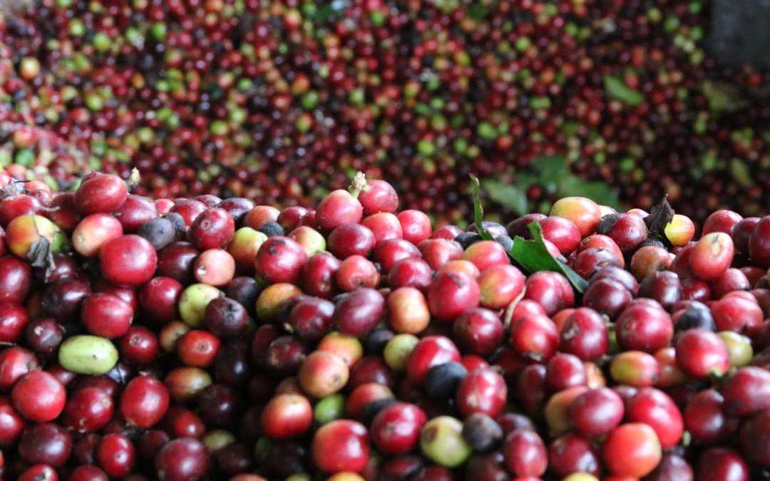 A short history of our Casa Sabor Café coffee